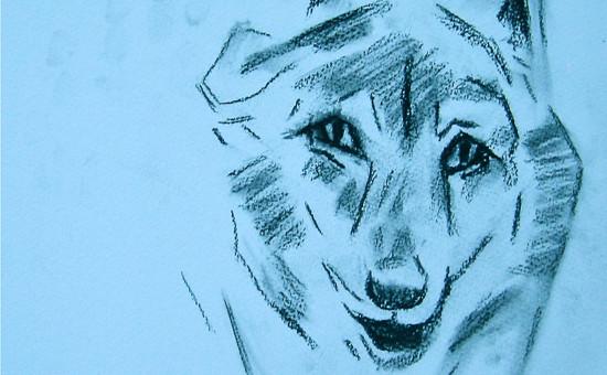 Skizze: Zora- die Alpha-Wölfin